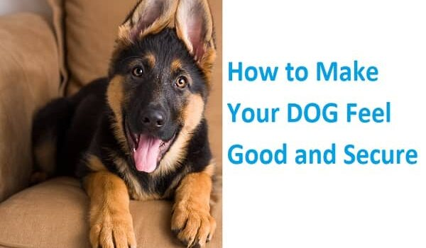 Make Your DOG Feel Good and Secure